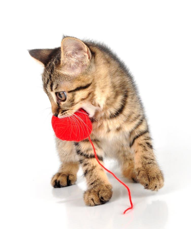 Gullig liten kattunge som bär en ullboll royaltyfri fotografi