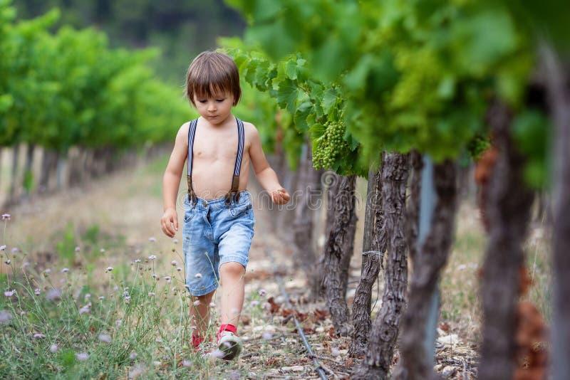 Gullig liten litet barnpojke som går i vingård, mellan raderna, royaltyfri bild