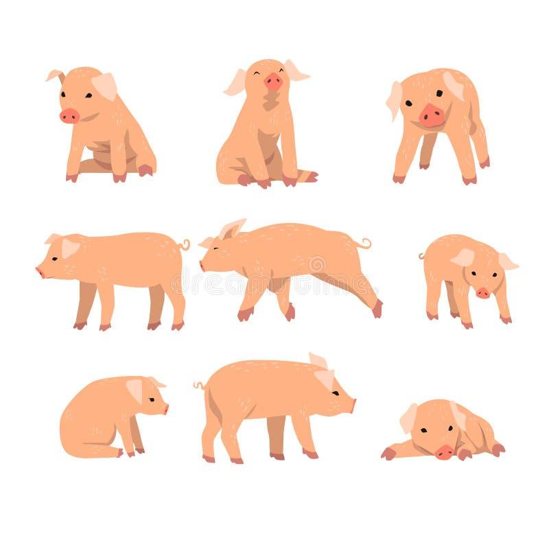 Gullig liten svinuppsättning, roligt piggy i olik handlinguppsättning av tecknad filmvektorillustrationer som isoleras på en vit  vektor illustrationer