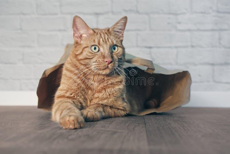 Gullig ljust rödbrun katt som ligger i en pappers- påse och från sidan ser royaltyfri fotografi