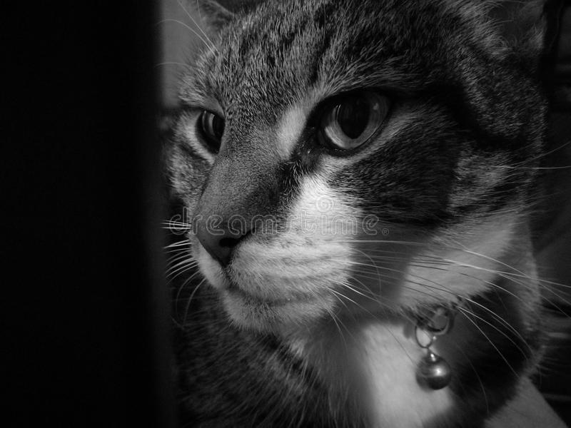 Gullig lugna mystisk höger kattblick fotografering för bildbyråer