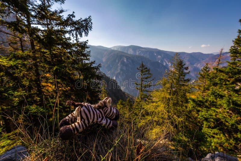 Gullig mjuk leksaksebra som tycker om scenisk sikt från Stadelwand på den Raxalpe dalen med mörkt - blå himmel och grön skog arkivbild