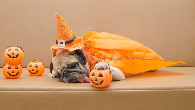 Gullig mopshund med dräkten av lycklig halloween dagsömn på soffan med plast- pumpa arkivbild