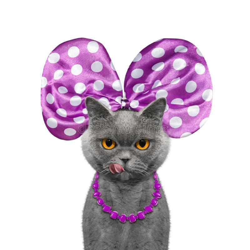 Gullig nätt katt med pilbåge-fnuren och halsbandet royaltyfri fotografi