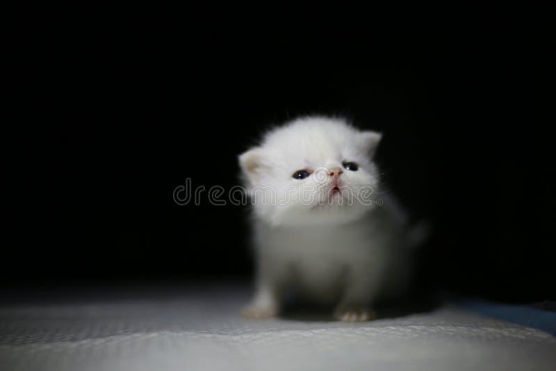 Gullig nyfödd katt royaltyfri foto