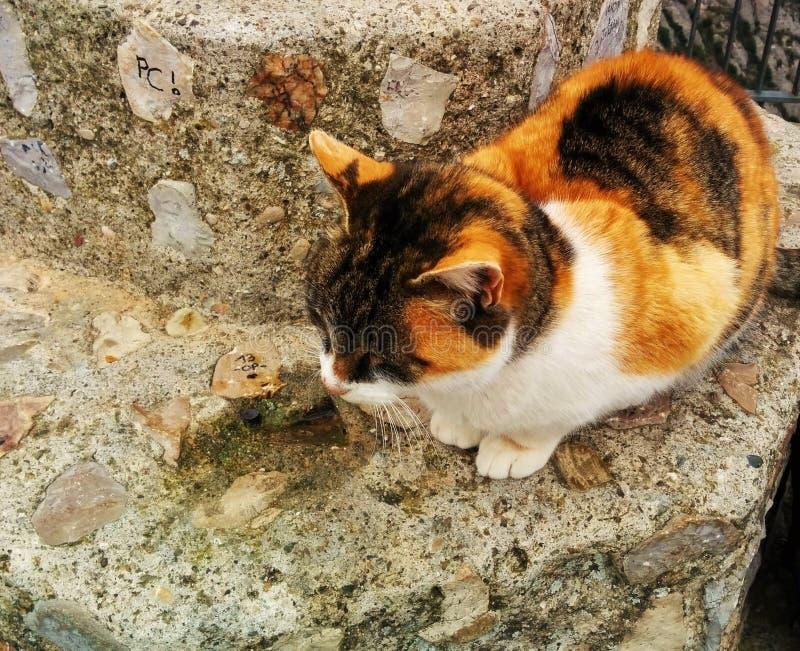 Gullig och ensam kattunge som vilar på bergspåret arkivfoton