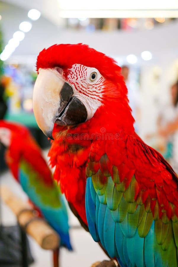gullig papegoja fotografering för bildbyråer