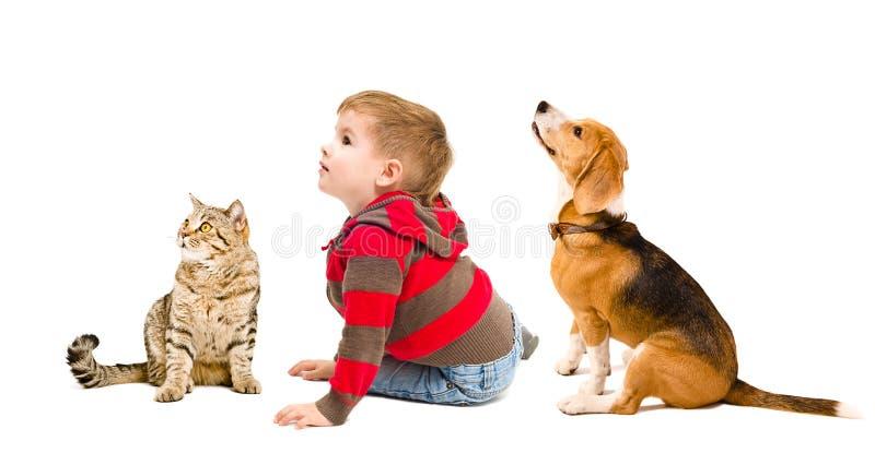 Gullig pojke, beaglehund och kattskotteraksträcka royaltyfria foton