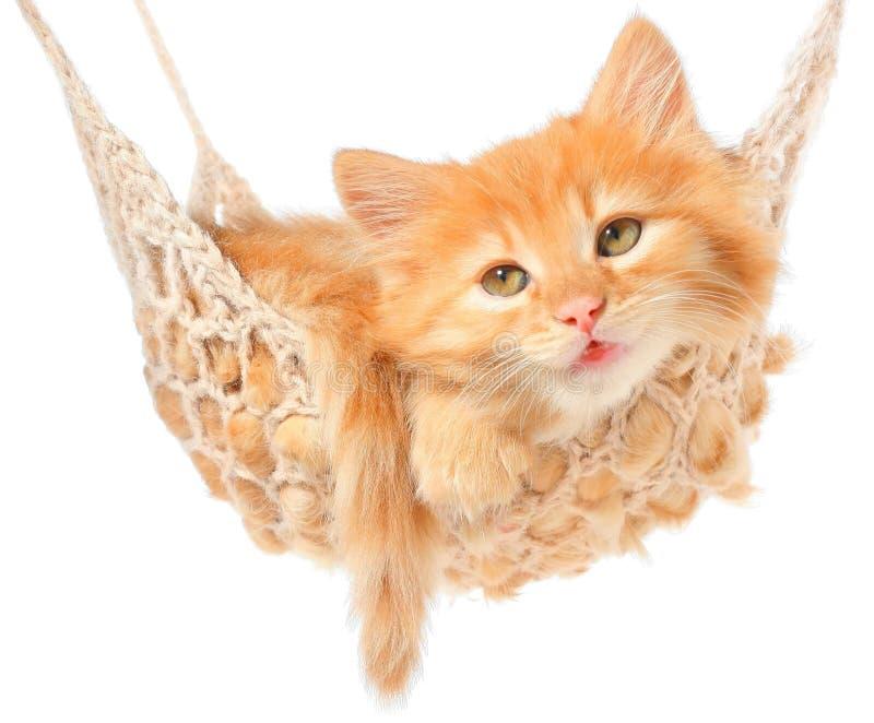 Gullig röd haired kattunge i hängmatta royaltyfri fotografi