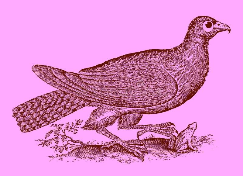 Gullig rovdjur: vråk eller hök som fångar en groda eller en padda vektor illustrationer