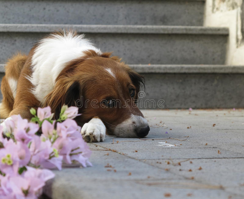 Gullig SAD hund royaltyfri bild