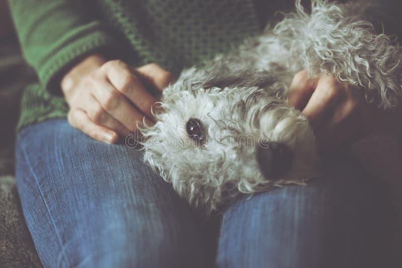 Gullig sjuk hund i händer arkivfoto