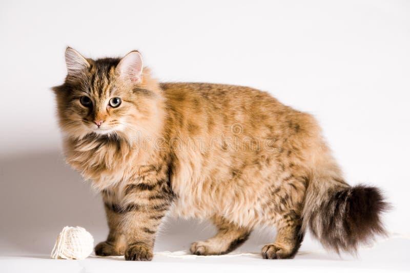gullig standing för katt arkivbild