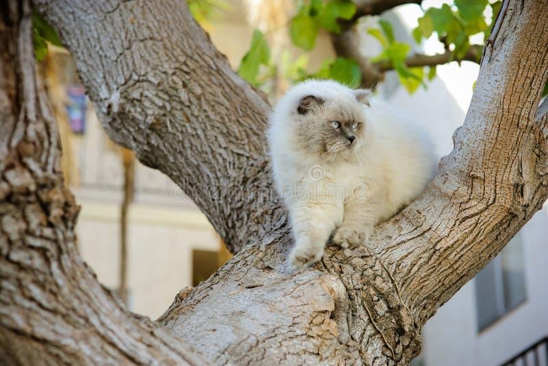 Gullig stilig härlig katt som går på träd Utomhus- hemhusdjur M royaltyfri fotografi
