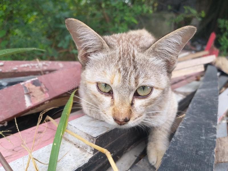 Gullig strimmig kattbil på trä royaltyfria bilder