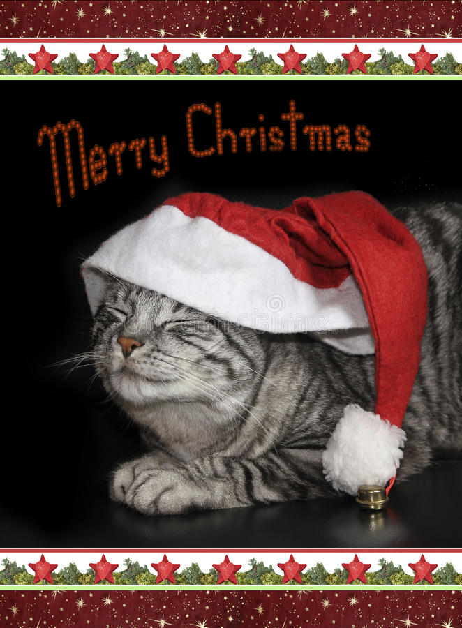 Gullig strimmig kattkatt med det St Nicholas locket, christmassy gräns, kort royaltyfria bilder