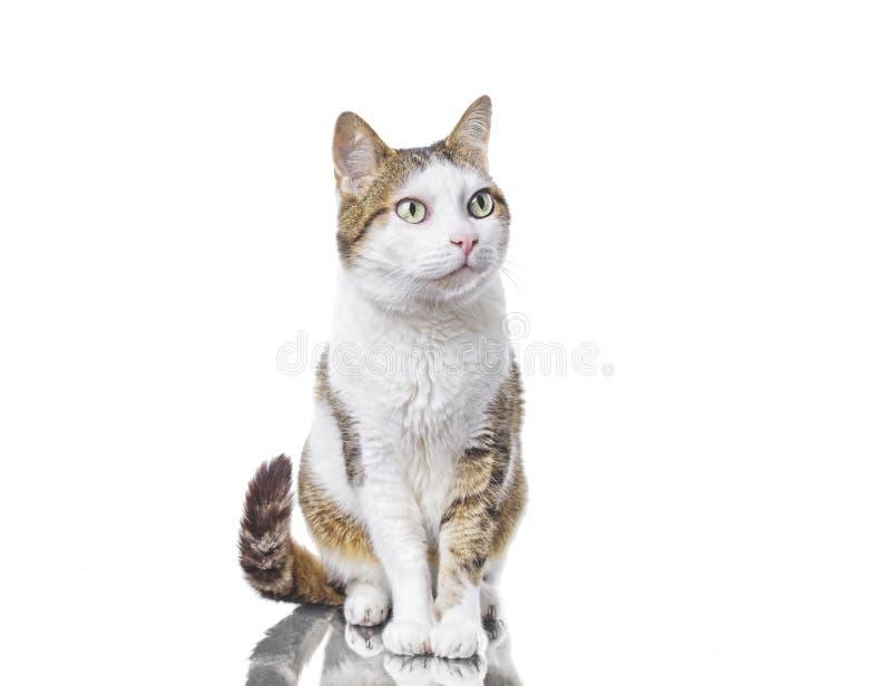 Gullig strimmig kattkatt som från sidan ser nyfiken Isolerat p? vit royaltyfri bild