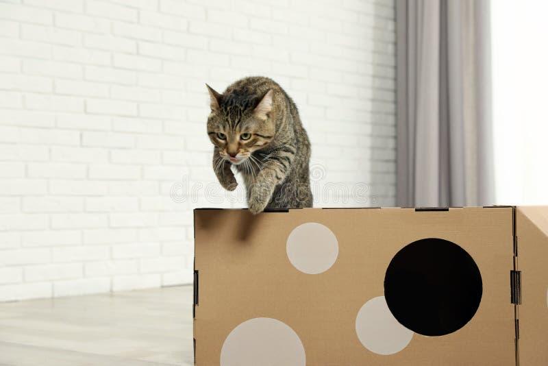 Gullig strimmig kattkatt som hoppar ut ur papphus i rum royaltyfri bild