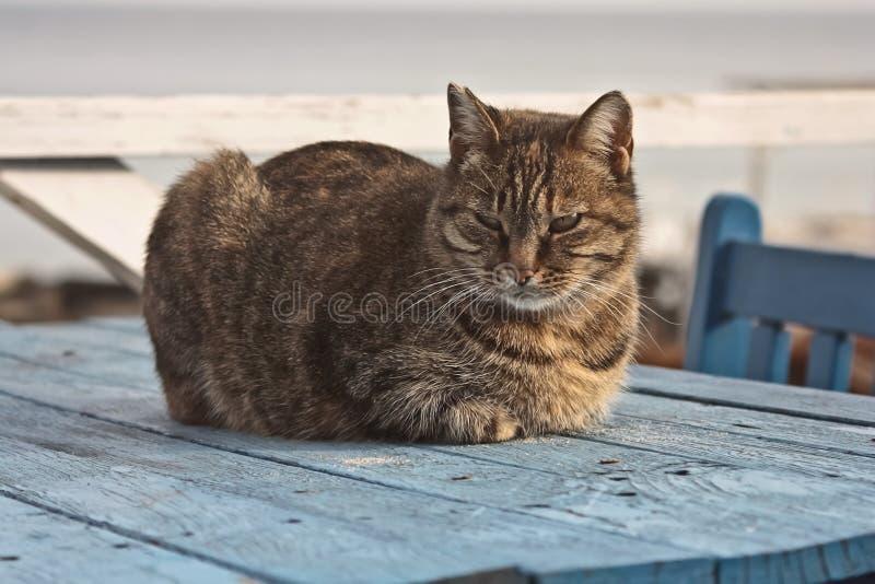 Gullig strimmig kattkatt som ligger på en trätabell arkivfoton