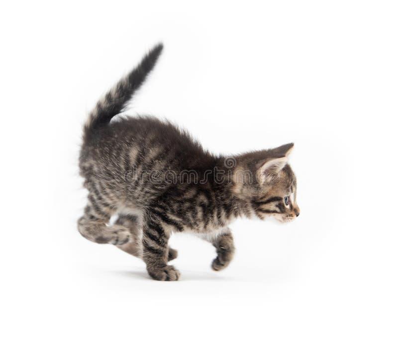 Gullig strimmig kattkittn med tafsar upp royaltyfri fotografi