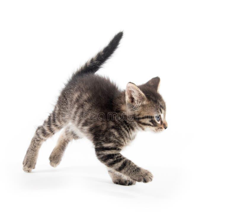 Gullig strimmig kattkittn med tafsar upp arkivbilder