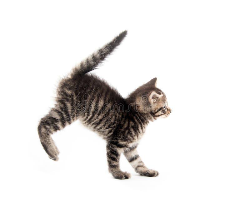 Gullig strimmig kattkittn med tafsar upp fotografering för bildbyråer