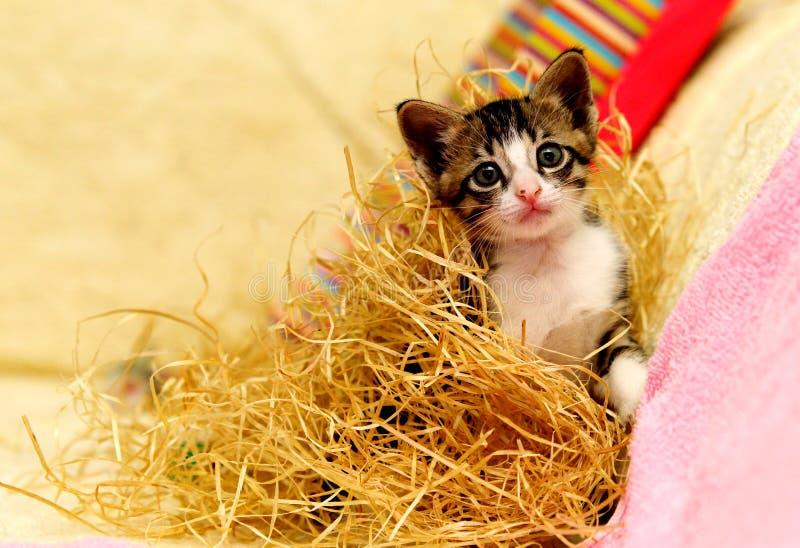 Gullig stygg kattunge som alltid är klar att spela arkivbild