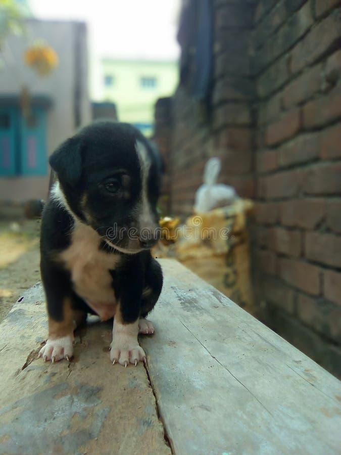 Gullig svart hund arkivbilder
