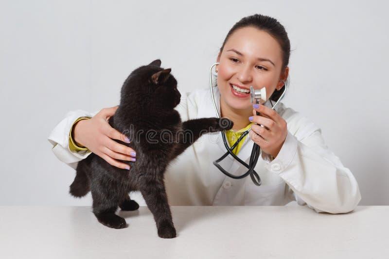 Gullig svart katt på doktorns veterinär På vitbakgrund arkivfoton