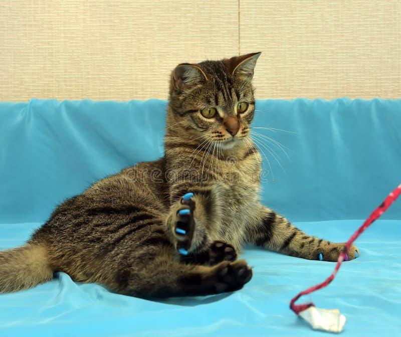 Download Gullig tabbykatt arkivfoto. Bild av markeringar, kattunge - 76702838