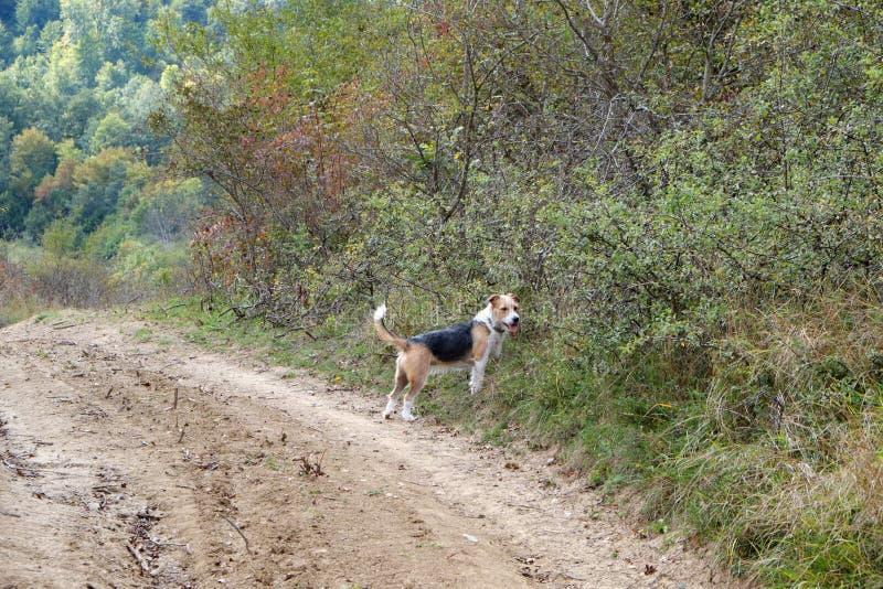 Gullig terrier i en skog fotografering för bildbyråer