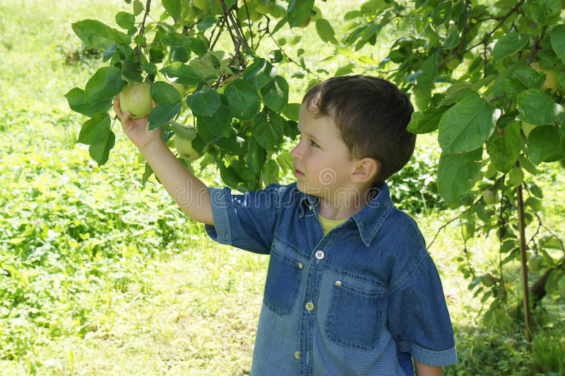 gullig trädgård för pojke royaltyfri foto