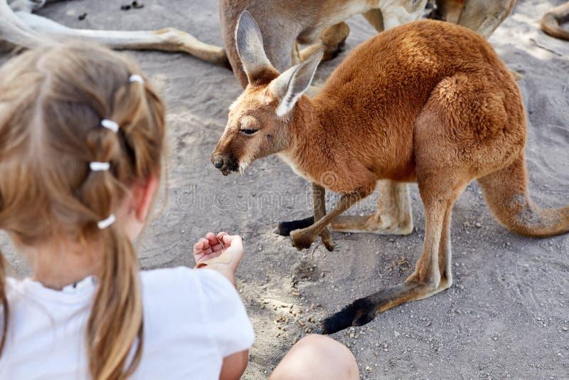 Gullig ung flicka och känguru i zoo arkivfoton
