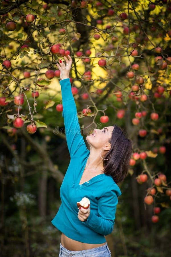 Gullig ung kvinna som väljer äpplen i en fruktträdgård arkivfoton