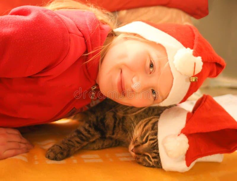Gullig ung lat sömnig katt i röd julhatt royaltyfria foton