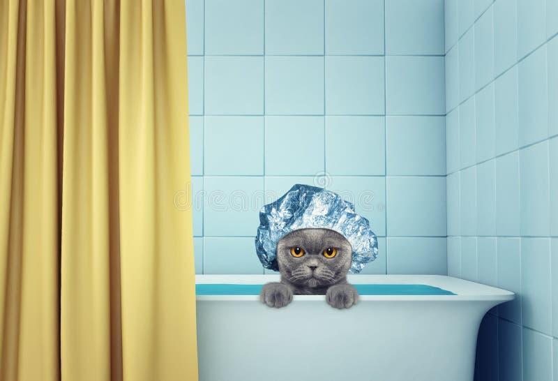 Gullig våt katt i badet royaltyfri illustrationer