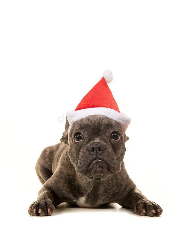 Gullig valp för fransk bulldogg som ligger bärande ner hatt för santa ` s arkivfoton