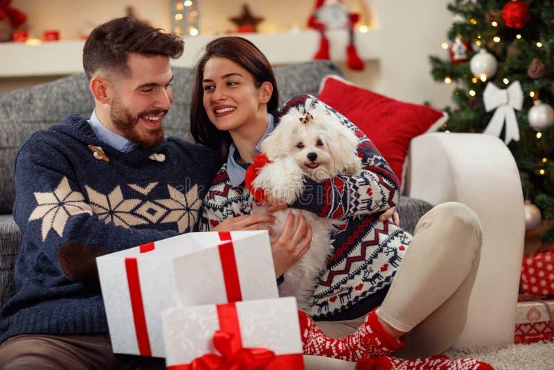 Gullig valp Meltzer som gåvan för jul royaltyfria bilder