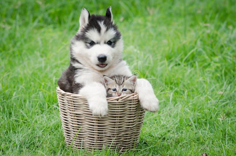 Gullig valp och kattunge i korg royaltyfri bild
