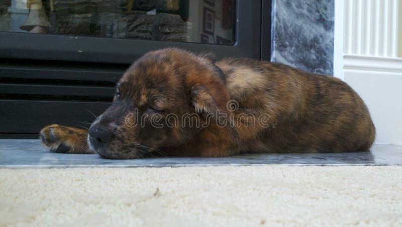 Gullig valp som sover nära spisen royaltyfri fotografi