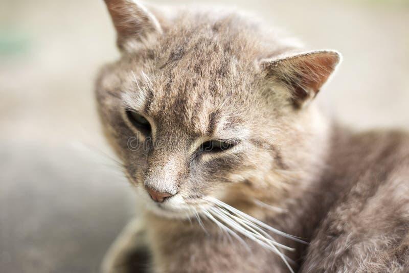 Gullig vila kattnärbild royaltyfria foton