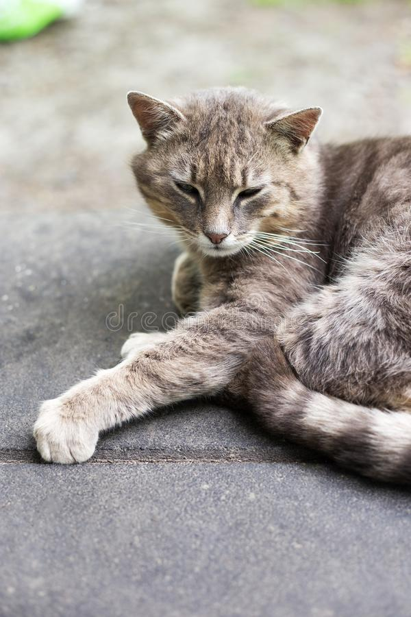 Gullig vila kattn?rbild arkivbilder