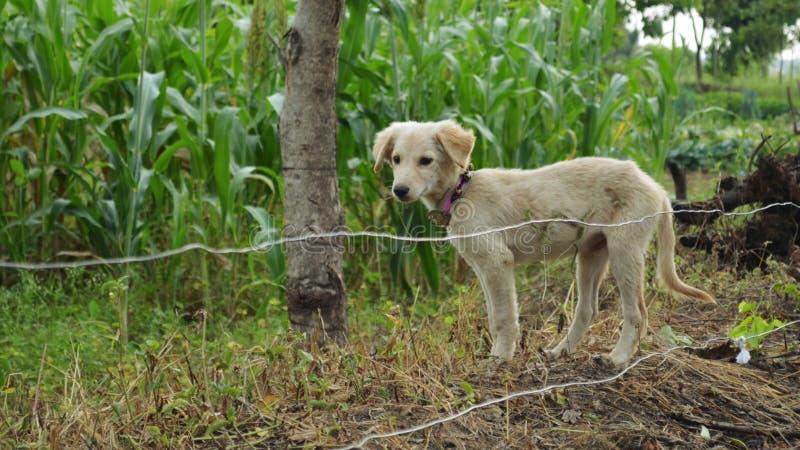 Gullig vit hund fotografering för bildbyråer