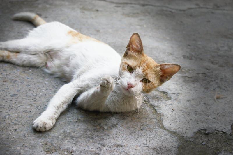 Gullig vit katt med en intressant och nyfiken uttrycksans fotografering för bildbyråer