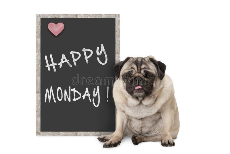 Gullig vresig mopsvalphund med det dåliga lynnet för måndag morgon som sitter bredvid svart tavlatecken med text lyckliga måndag arkivfoto