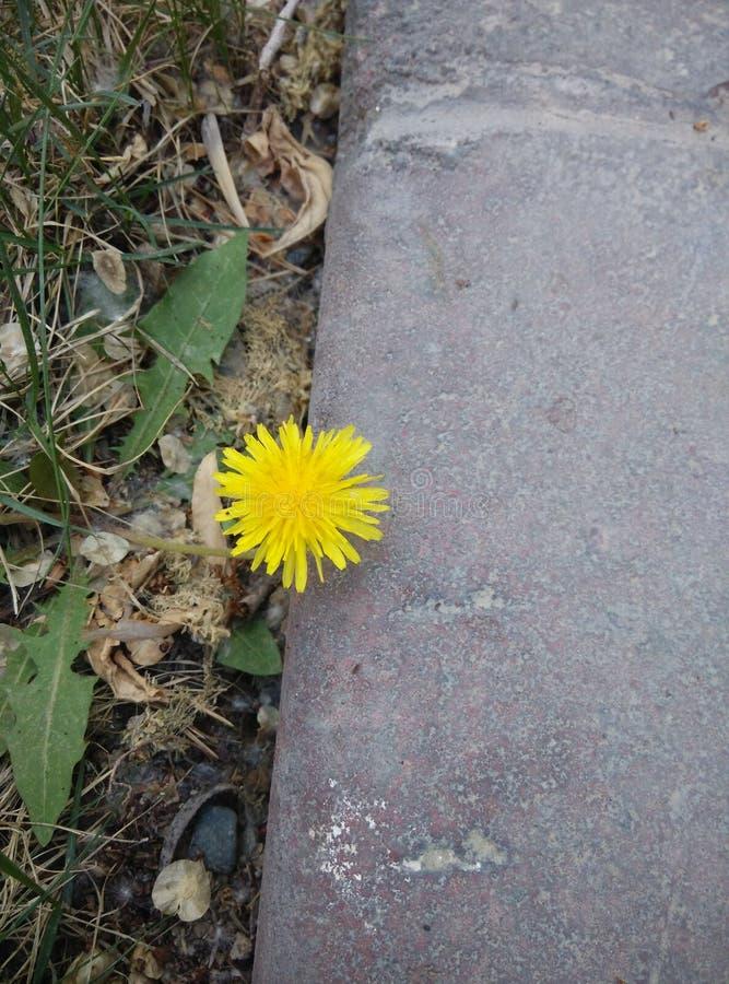 gulliga blommor fotografering för bildbyråer
