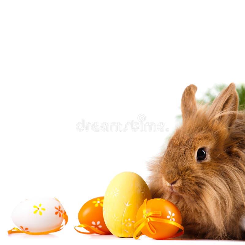 Gulliga Bunny With Easter Eggs royaltyfria bilder