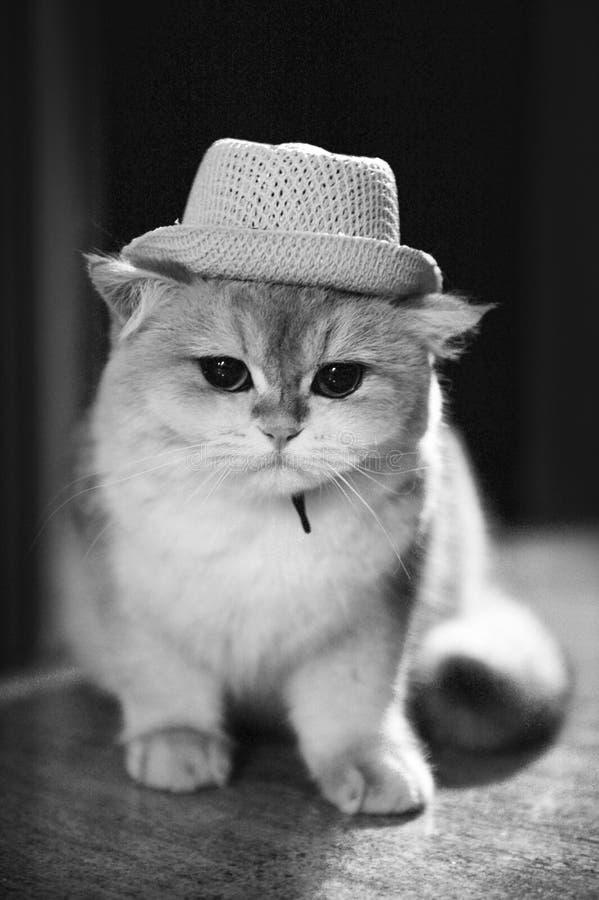 Gulliga Cat Hat royaltyfri fotografi