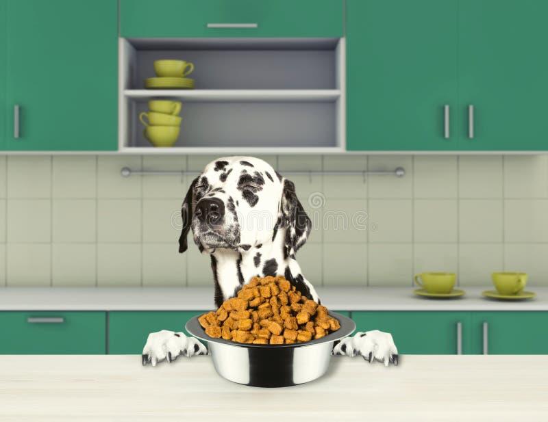 Gulliga dalmatian hundavskräden som äter torr mat stock illustrationer