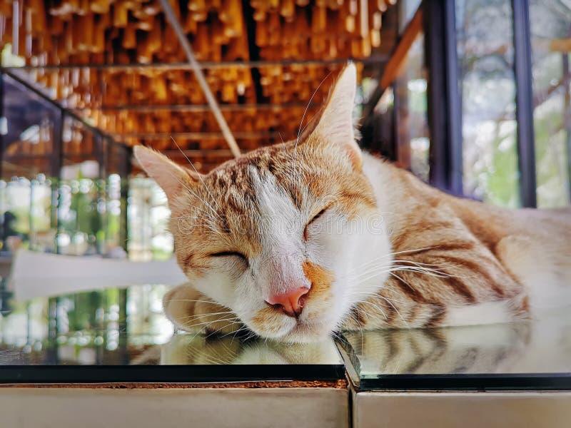 Gulliga förtjusande inhemska Cat Sleeping på spegeltabellen arkivbild
